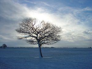Sådan et vintertræ